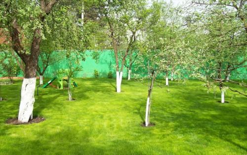 Как ухаживать за деревом или что должно быть в аптечке для сада