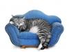 Роман - Ремонт и перетяжка мебели на дому
