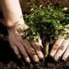 Посадка деревьев и кустарников. Озеленение.